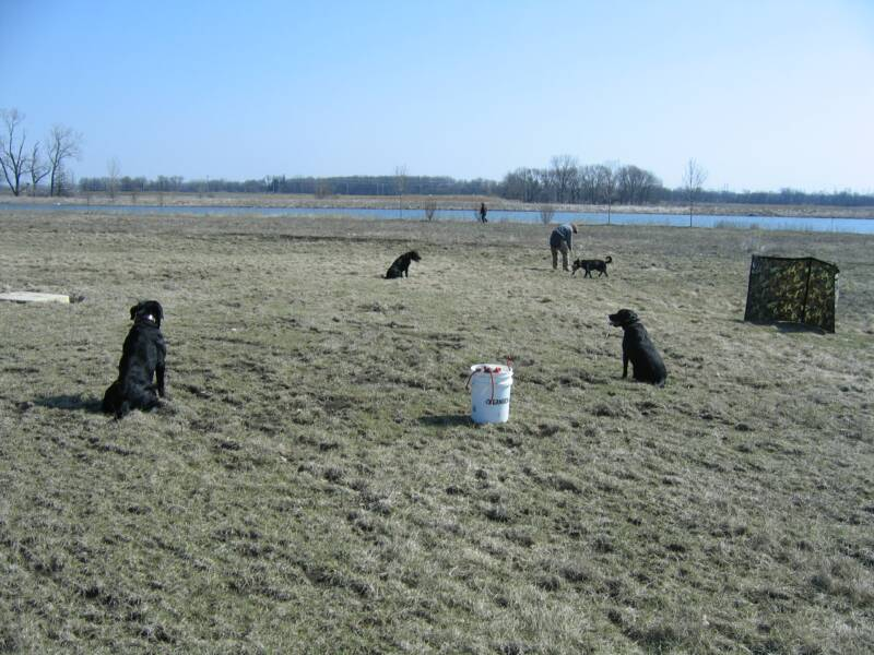 foundation_obedience training
