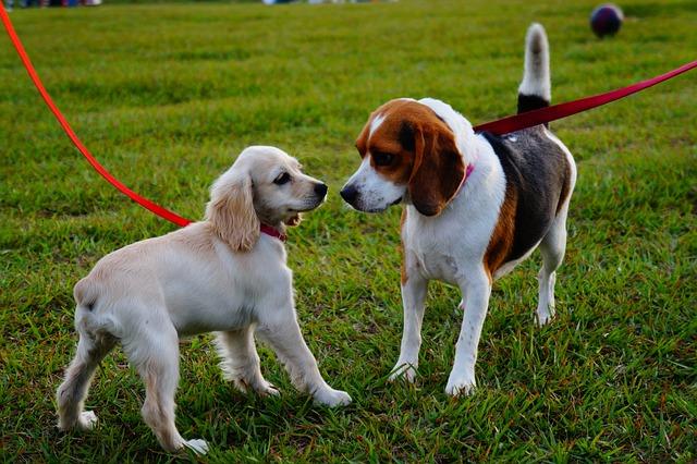 Dog Parks – You Make the Call