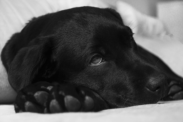 The Best Hypoallergenic Dog Foods