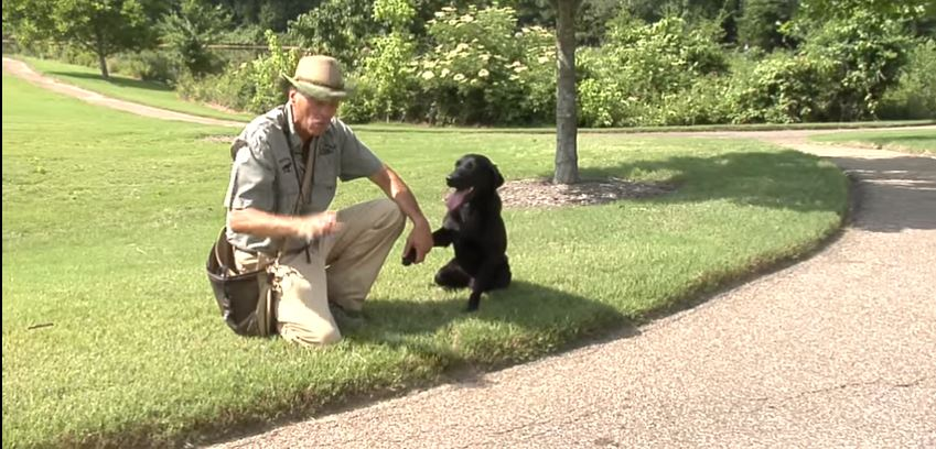 Dog Training in the Heat of the Summer