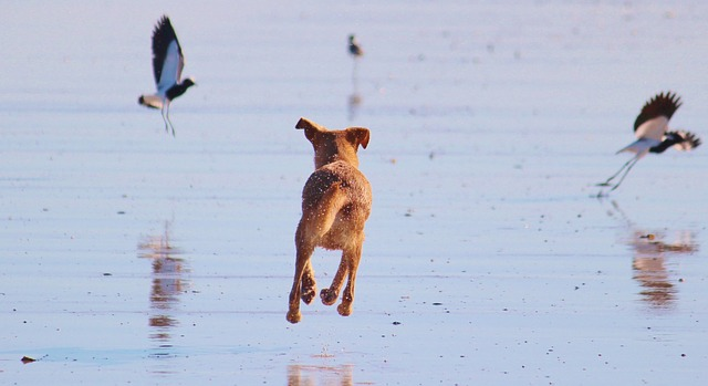 Common Problems With Bird Dogs