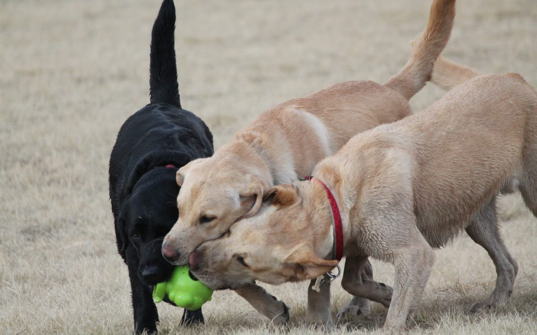 Northern Illinois Dog Parks – Dog Training Northern Illinois