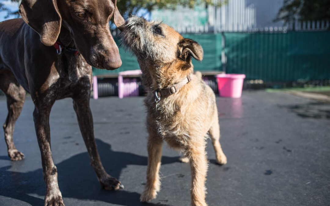 Problems with Doggie Day Care